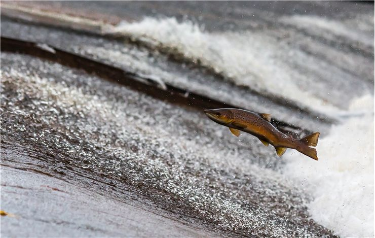 Picture Of Fishing Salmon